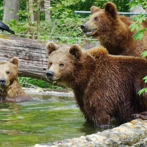 zuerich-erleben-wildnispark